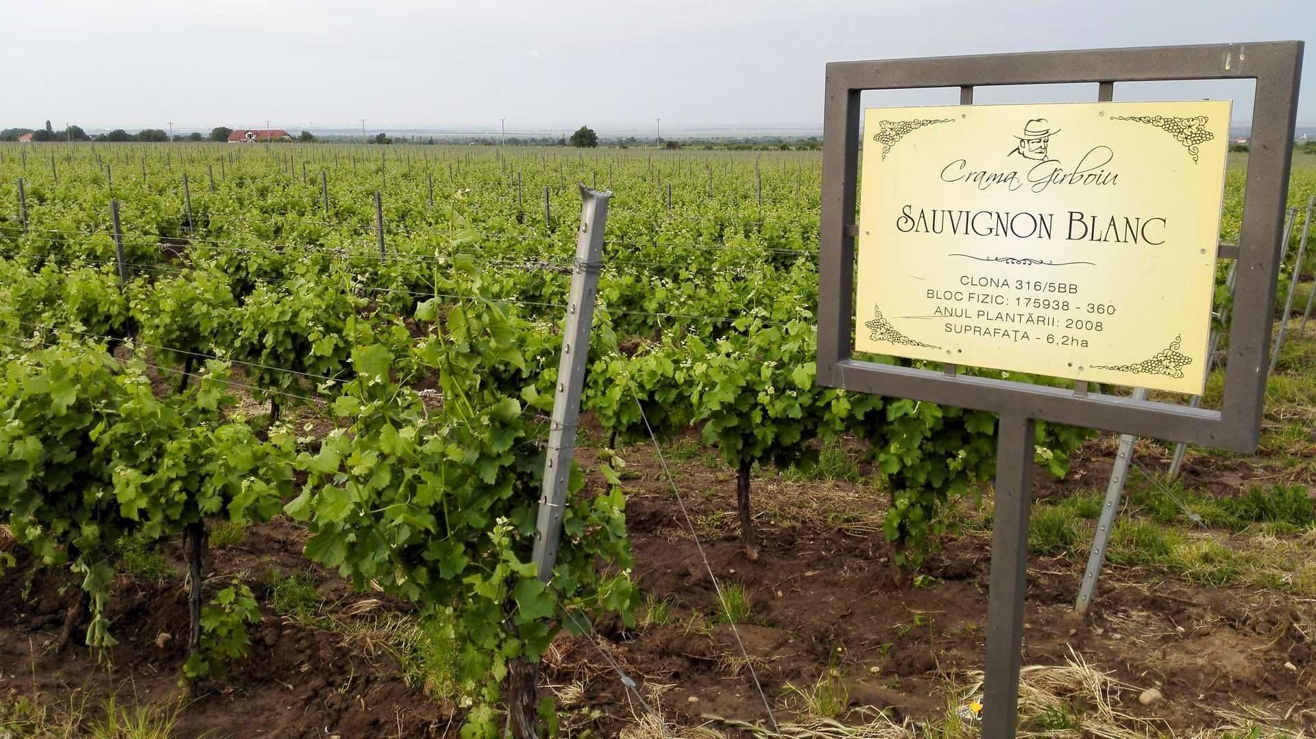 Wycieczka na winobranie w Egerze