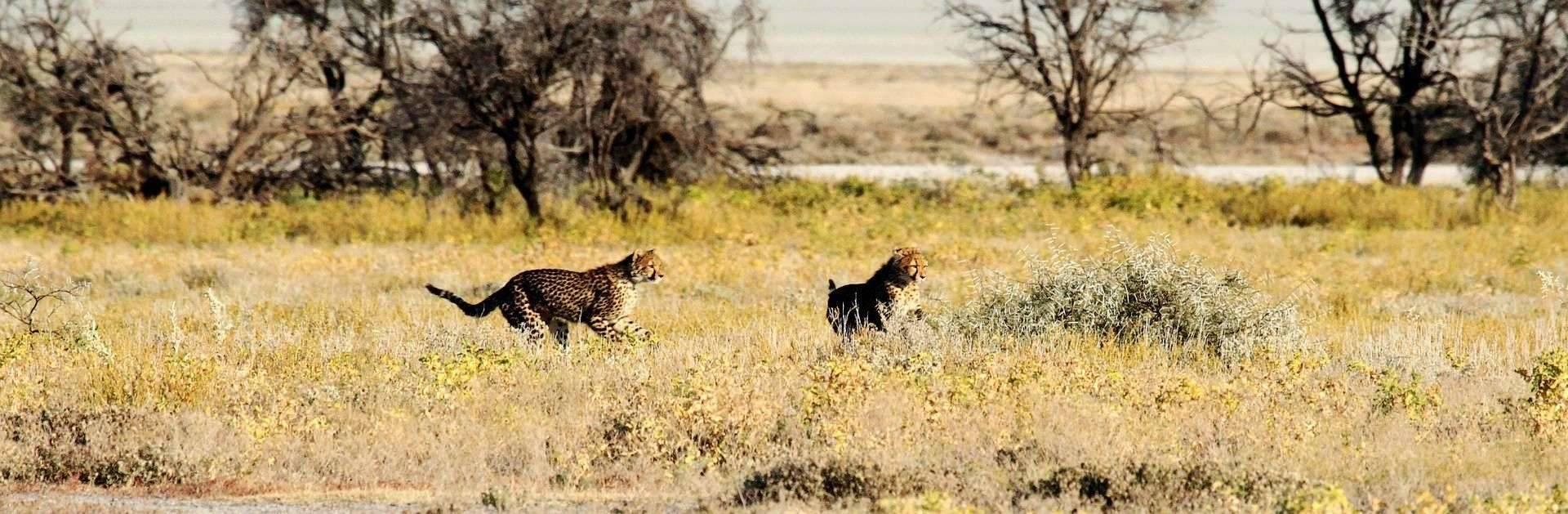 Namibia wyjazdy dla firm