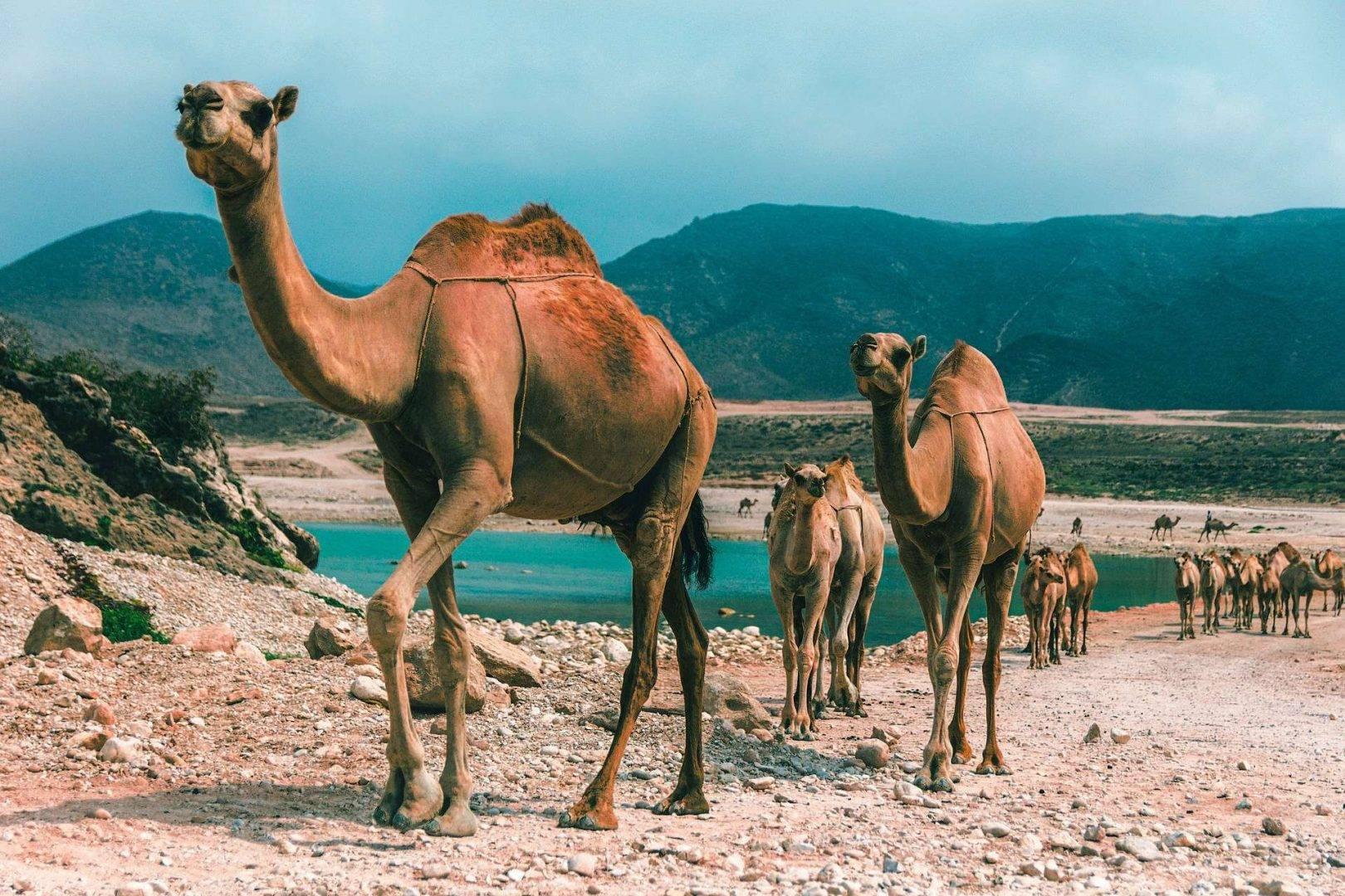 Oman wyjazdy firmowe